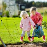 Общие правила подкормки плодовых